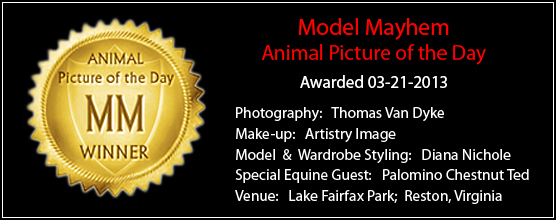 http://www.restonstudio.com/images/MM_Awards/MM_Profile_Banner_03-21-2013.jpg